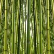 Advantages of decorating with bamboo curtains